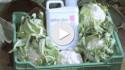 delfan plus_PL testimonial aminokwasy
